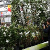 Plantencentrum-Genk
