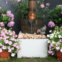 Fuchsia show Bolderberg