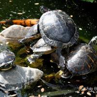 Schilpadden